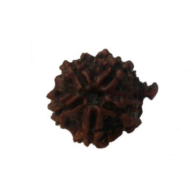 GANESHA RUDRAKSHA (RUCG-002/1)- (NEPAL)