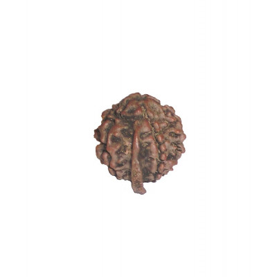 GANESH RUDRAKSHA With Certificate (RUCG-002/7)- (NEPAL)