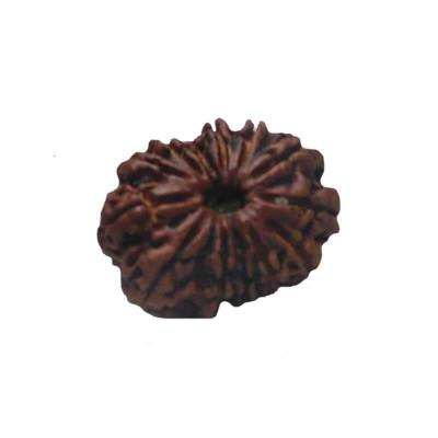 Natural 13- Mukhi Rudraksha With Certificate (RUC13-003)