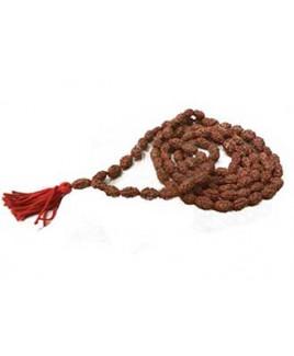 Natural 2 - Mukhi Rudraksha Rosary / Mala With Certificate - (MARUJ02-001)- (JAVA)