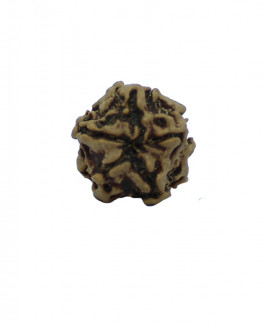 NATURAL 1 MUKHI RUDRAKSHA With Certificate (RUR01-006)