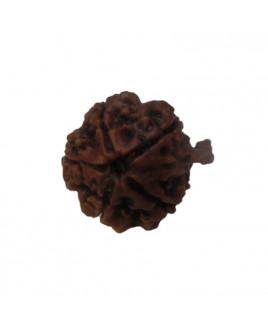 GANESHA RUDRAKSHA(RUCG-002/9)- (NEPAL)