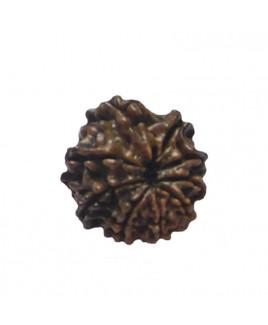 Natural 9- Mukhi Rudraksha With Certificate (RUC09-009)