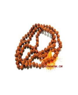5 Mukhi Rudraksha Mala / Rosary - 08 mm (MARU-002)- (INDIA)