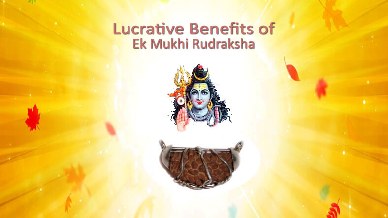 Ek Mukhi Rudraksha & Its Benefits