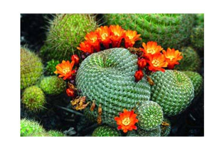 Vastu For Plants At Home