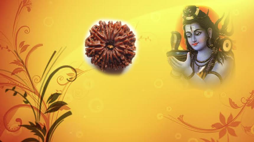 Thirteen Faced Rudraksha