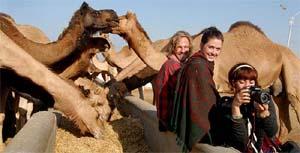 Bikaner Camel Festival, Bikaner Camel Festival in Rajasthan, Camel festival India.