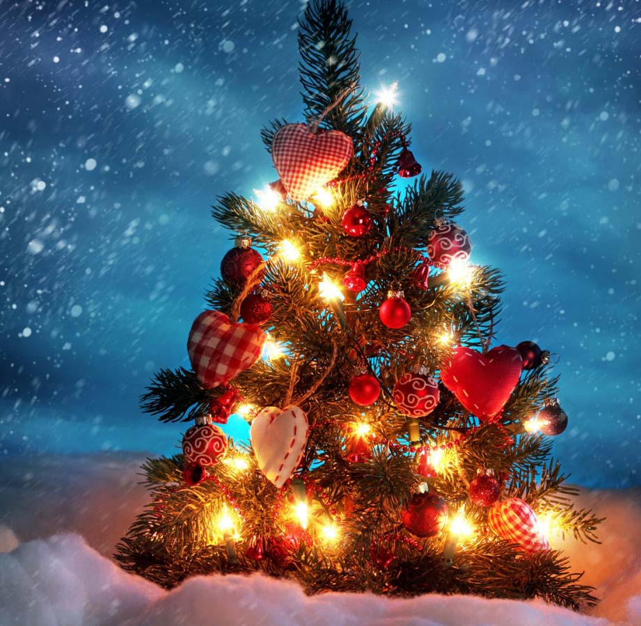 Christmas Festival In India.Christmas Day Celebration History Of Christmas Day