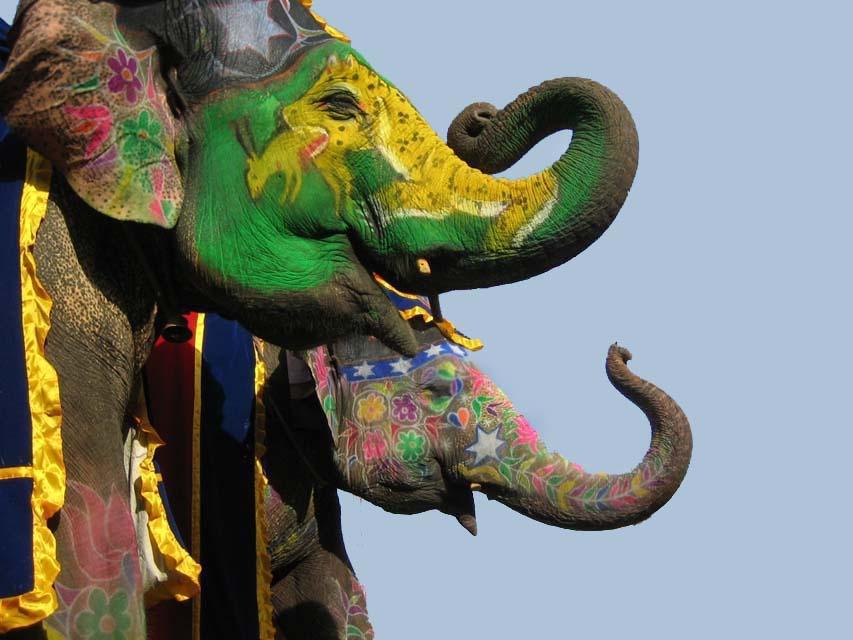 Elephant Festival, Elephant Festival 26 March, Elephant Festival Jaipur.