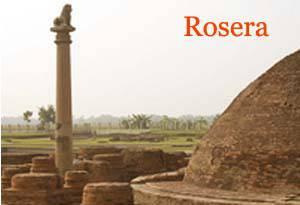 Rosera