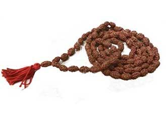 2 Mukhi Rudraksha Mala / Rosaries